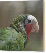 Profile Of A Conure Parrot Up Close Wood Print