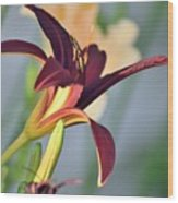 Profile Of A Day Lily Wood Print
