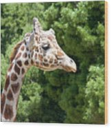 Profile Of A Giraffe Wood Print