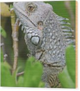 Profile Of A Gray Iguana In The Top Of A Bush Wood Print
