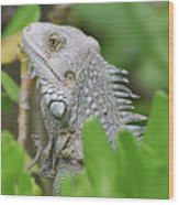 Profile Of A Gray Iguana Perched In A Bush Wood Print