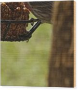 Profile Of A Male House Finch Wood Print