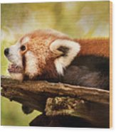 Profile Of A Red Panda Wood Print
