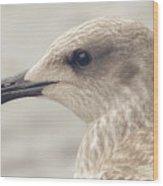 Profile Of Juvenile Seagull Wood Print