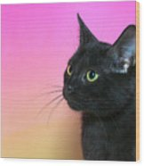 Profile Portrait Of A Black Kitten Wood Print