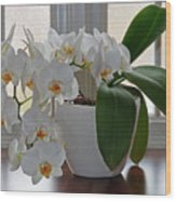 Profusion Of White Orchid Flowers Wood Print