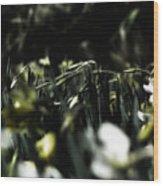 Promises Of Spring. Wood Print