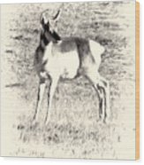 Pronghorn Angelope Wood Print