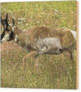 Pronghorn Antelope Wood Print
