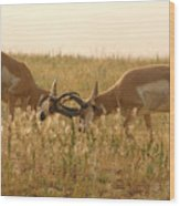 Pronghorn Antelope Sparring In Autumn Field Wood Print