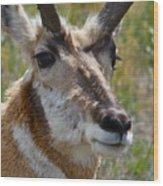Pronghorn Buck Face Study Wood Print