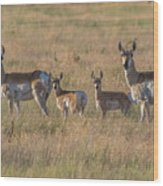 Pronghorn Fawns And Their Mothers Wood Print