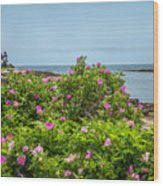 Prospect Harboa Roses Wood Print
