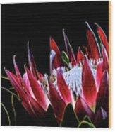 Protea 1 Wood Print