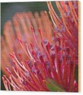 Protea 5 Wood Print