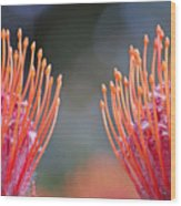 Protea 6 Wood Print