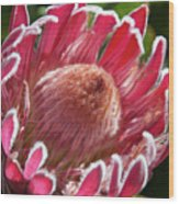 Protea Bloom Wood Print