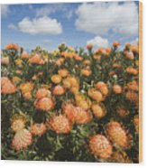 Protea Blossoms Wood Print