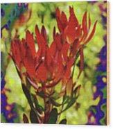 Protea Flower 4 Wood Print