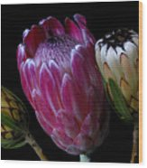 Proteas Wood Print