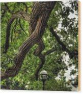 Protective Oak Wood Print