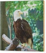 Proud Eagle Wood Print