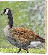 Proud Goose Wood Print