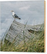 Proud Seagull Wood Print