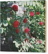 Provence Red Roses Wood Print