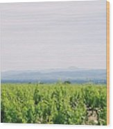Provence Spring Vineyard Wood Print