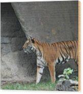 Prowling Tiger Wood Print