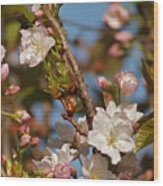 Prunus Amanogawa Wood Print