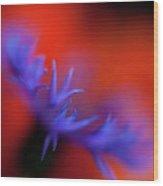 Psychedelic Cornflower Wood Print