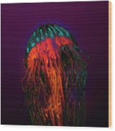 Psychedelic Jellyfish Wood Print