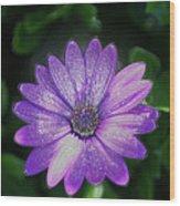 Psychedelic Purple Petals  Wood Print