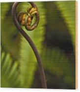 Pua A Ehu Ehu No 5 Wood Print