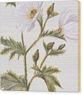 Pua Kala Flower Wood Print