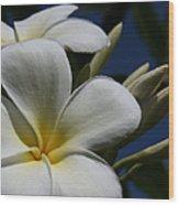 Pua Lena Pua Lei Aloha Tropical Plumeria Maui Hawaii Wood Print