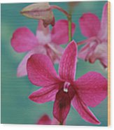 Puanani Kealoha Dendrobium D Burana Red Flame Hawaiian Orchid Wood Print