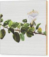 Puapilo Plant Wood Print