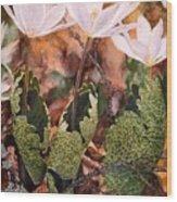 Puccoon Wood Print