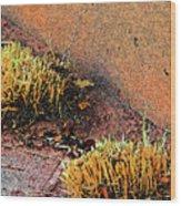 Pueblo Downtown Landscaping Wood Print