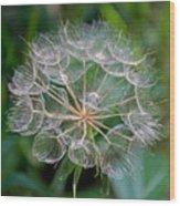 Puffball Along Bike Trail Near Walker-minnesota  Wood Print