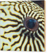 Pufferfish Wood Print