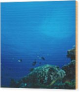 Pufferfish On Coral Reef Wood Print by James Forte