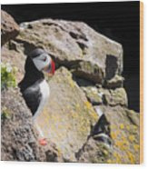 Puffin And Rocks Wood Print