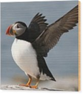 Puffin Impersonating An Eagle Wood Print by Stanley Klein