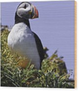 Puffin On The Rock Wood Print