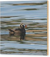Puffin Reflected Wood Print