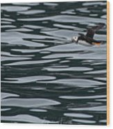 Puffin With Dinner Wood Print